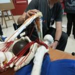 scheletro creato da Peter Braendli